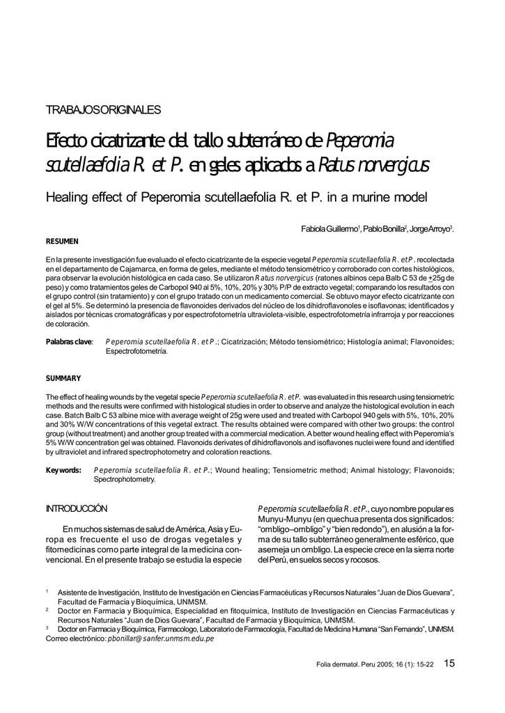 Efecto cicatrizante del tallo subterráneo dePeperomia scutellaefolia