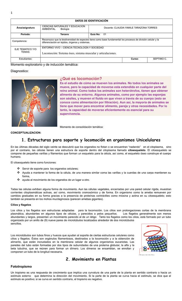 1 Estructuras Para Soporte Y Locomoción En Organismos