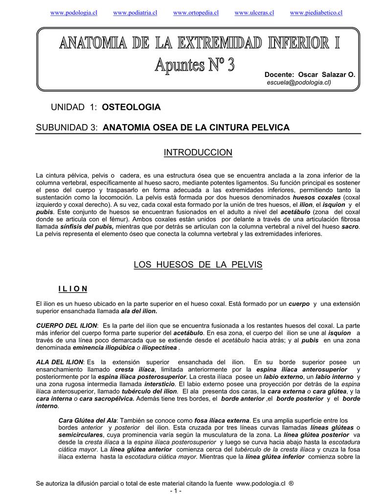 ANATOMIA DE LA EXTREMIDAD INFERIOR I