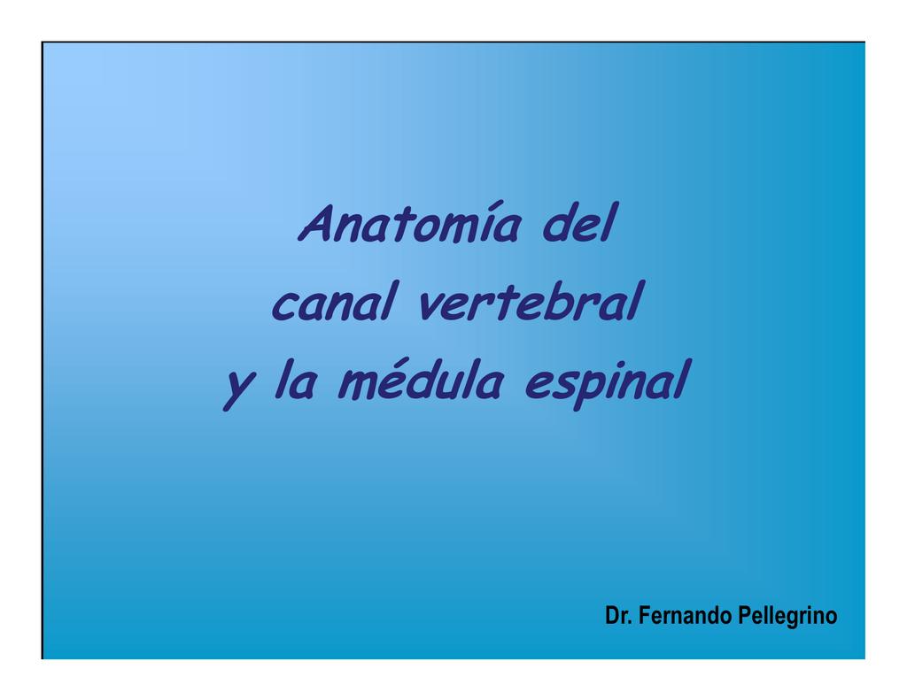 Anatomía del canal vertebral y la médula espinal