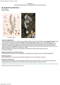 Flora Ornamental Española Aspectos Históricos Y Principales Especies