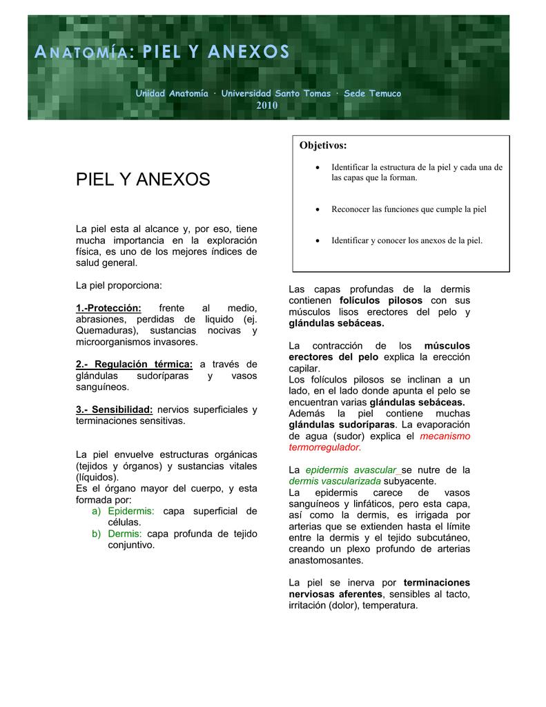 PIEL Y ANEXOS ANATOMÍA: PIEL Y ANEXOS