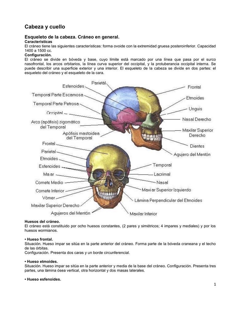 Excepcional Anatomía Prácticas De Etiquetado Hueso Festooning ...