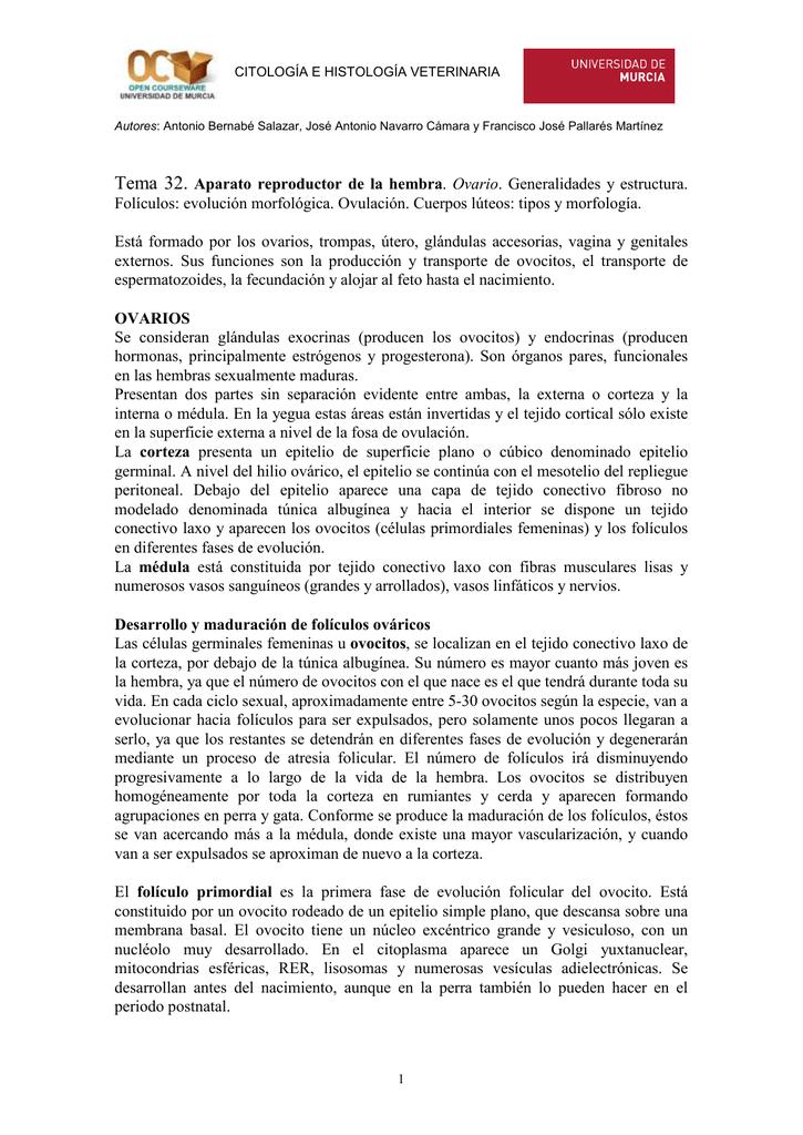 Tema 32 Aparato Reproductor De La Hembra Ovario Generalidades