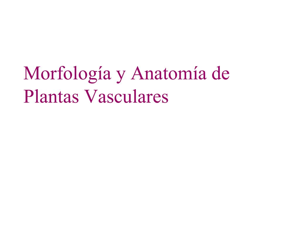 Morfología y Anatomía de Plantas Vasculares