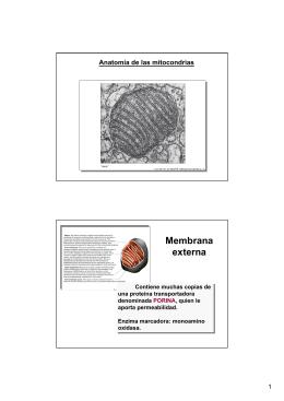 hydroperoxide metabolism in mammalian organs pdf