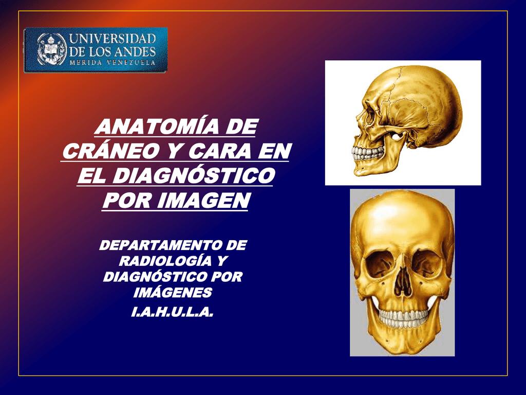 anatomía radiológica de cráneo y cara