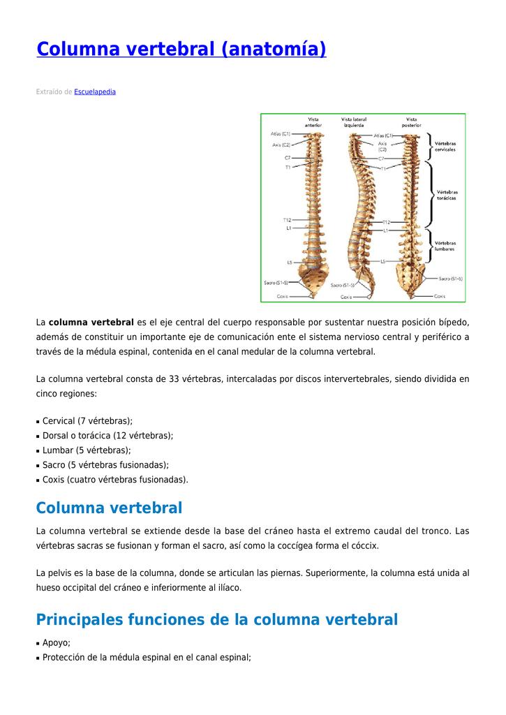 Columna vertebral (anatomía)