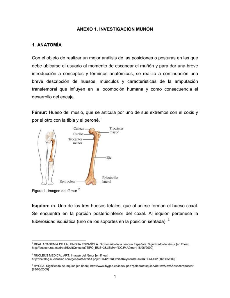 Asombroso Ct Anatomía Cabeza De Escaneo Componente - Anatomía de Las ...