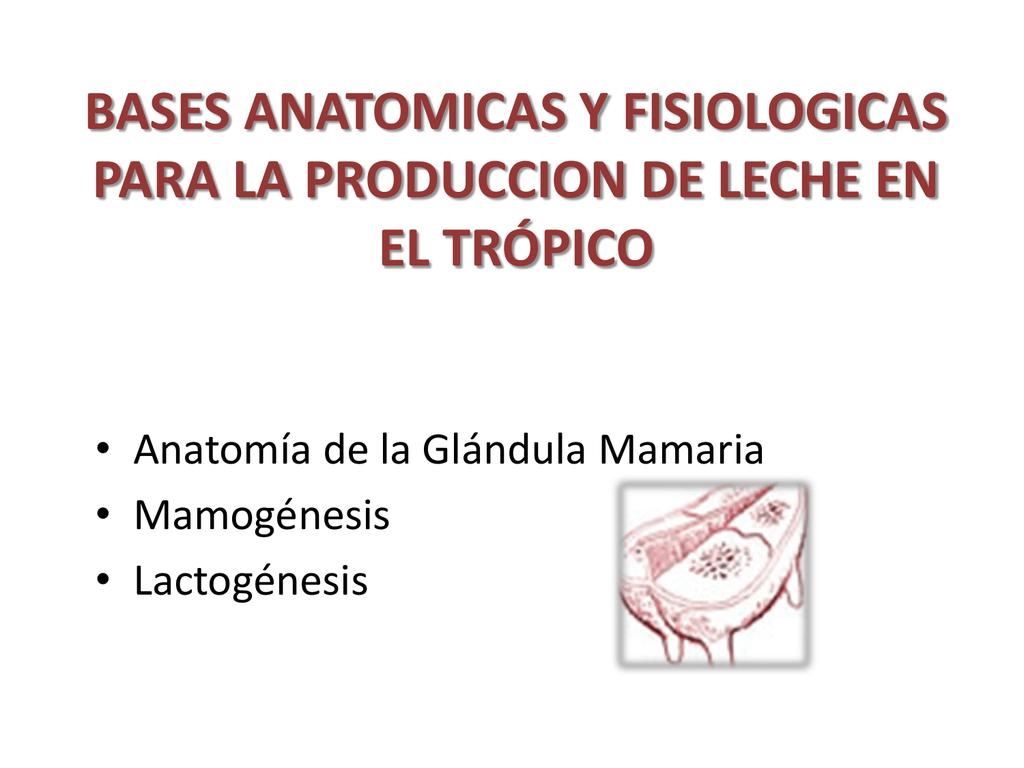 Clase 5. Anatomía de la glandula mamaria