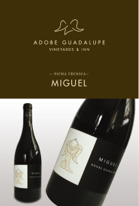 MIGUEL MIGUEL - Adobe Guadalupe