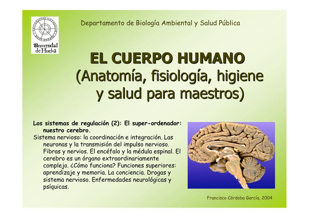 Excelente Anatomía Y Fisiología Stanley E Gunstream Foto - Anatomía ...