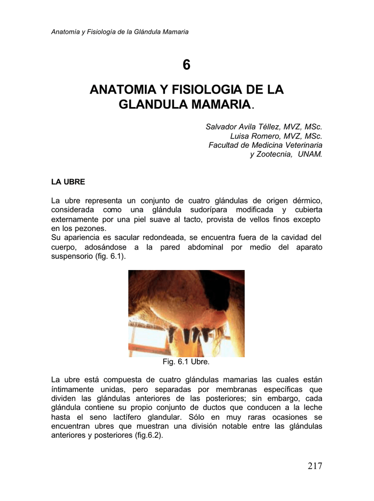 anatomia y fisiologia de la glandula mamaria.