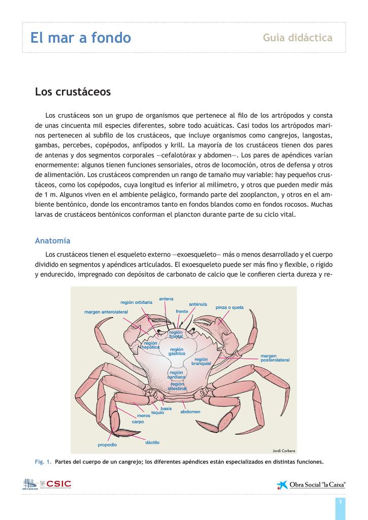 guía didáctica crustáceos