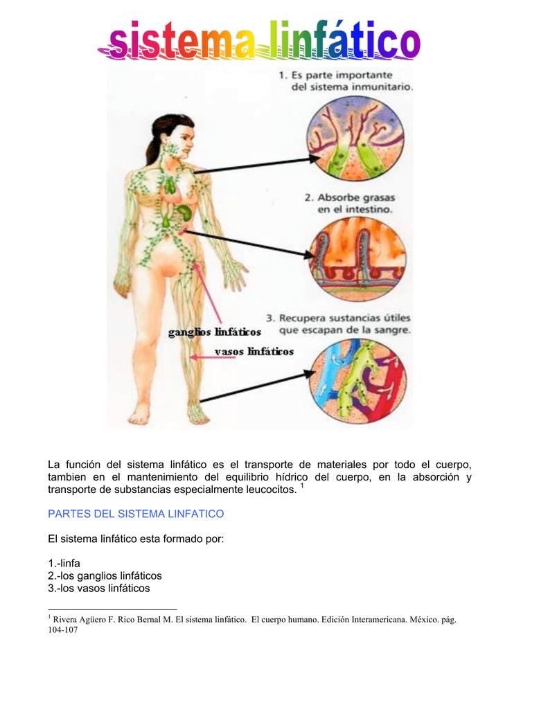 La función del sistema linfático es el transporte de materiales por