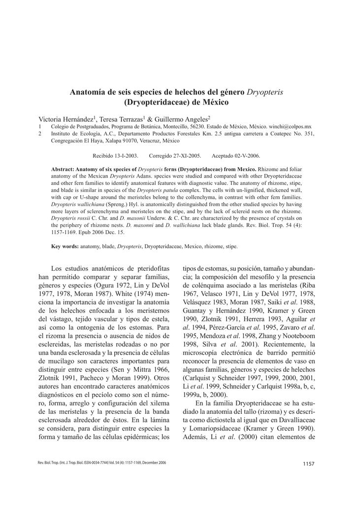 Anatomía de seis especies de helechos del género Dryopteris