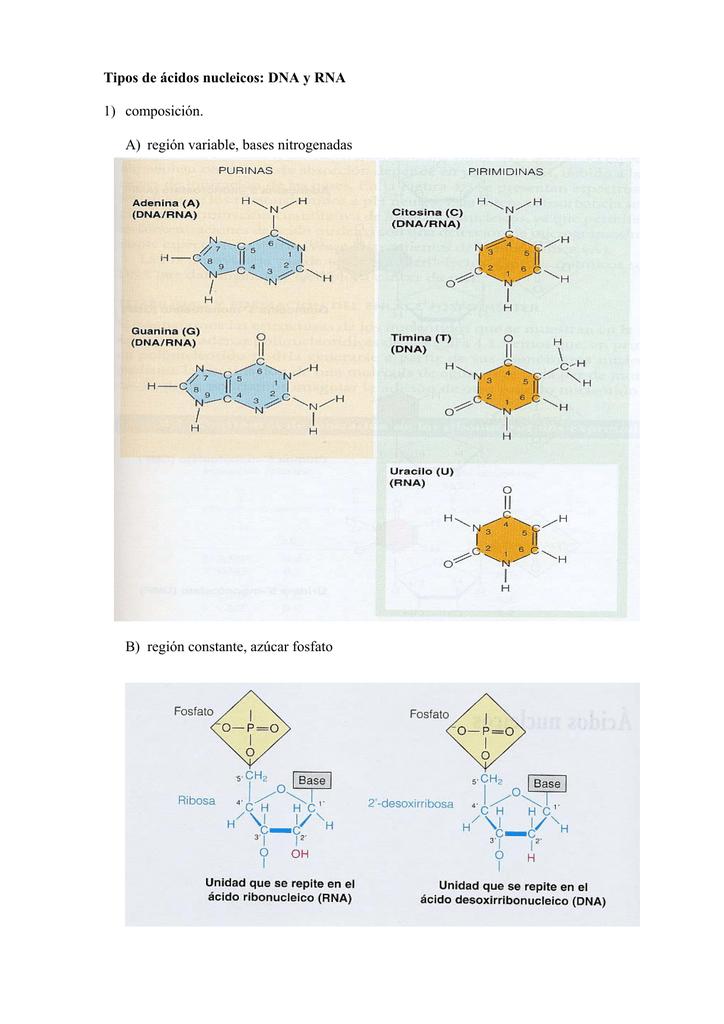 Estructura Del Material Genético