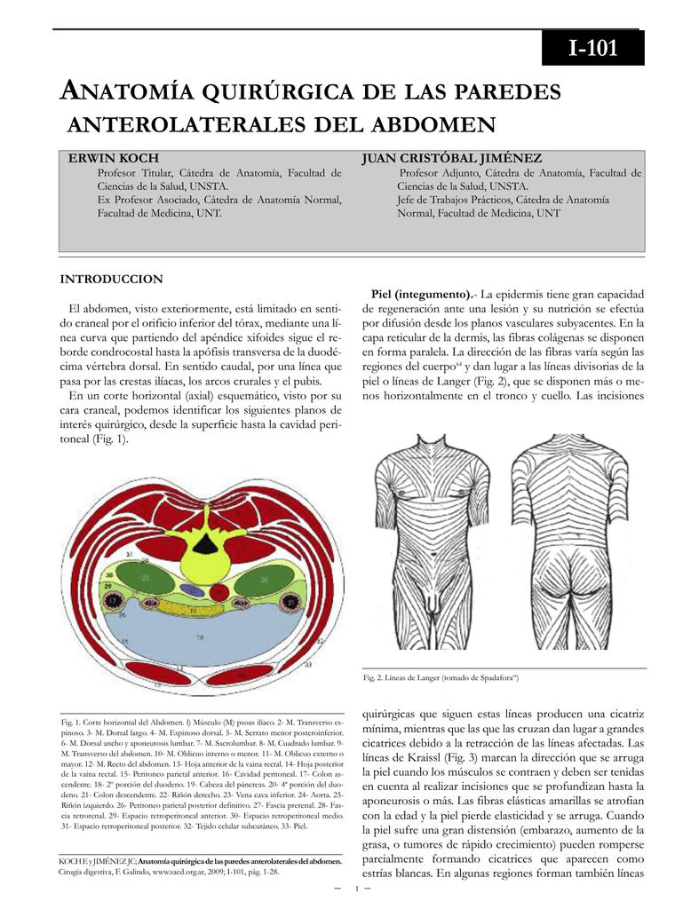 Anatomía quirúrgica de las paredes anterolaterales del abdomen.
