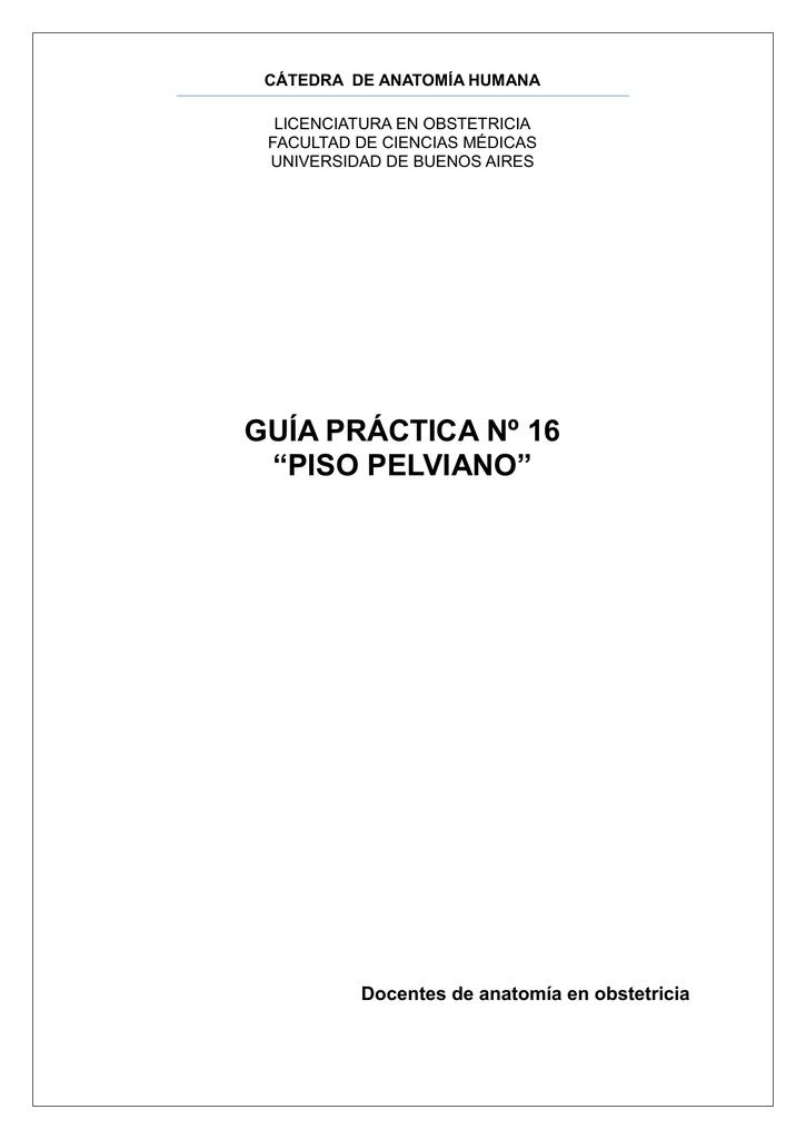 piso pelviano - Anatomia en Obstetricia