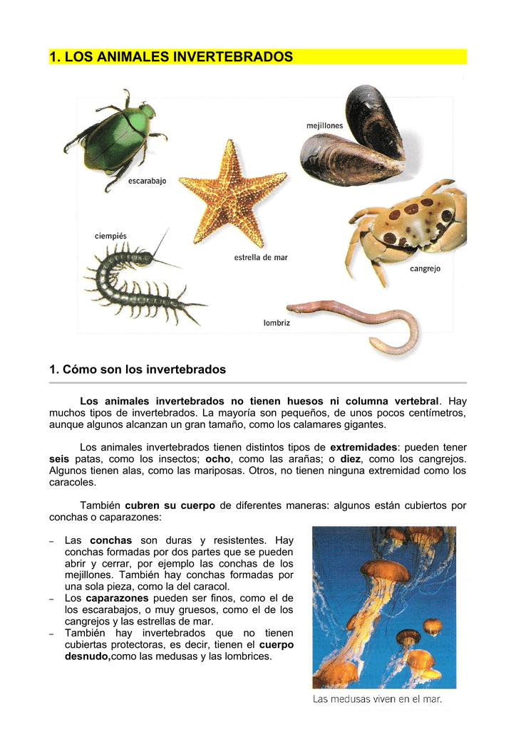 1 Los Animales Invertebrados