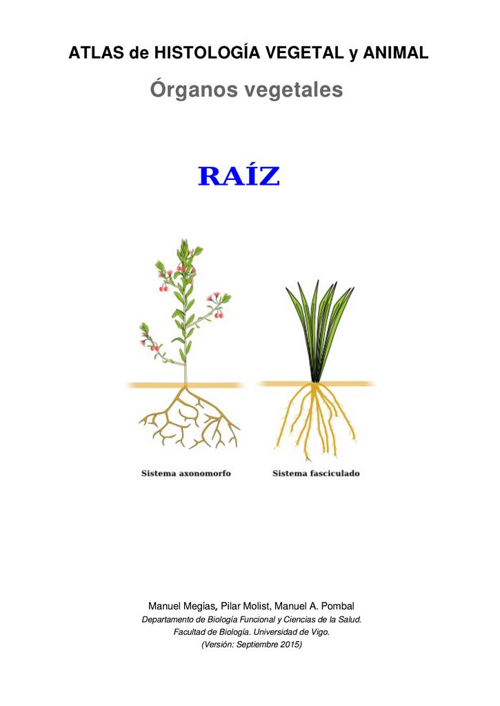 Descargar la raíz en pdf - Atlas de Histología Vegetal y Animal