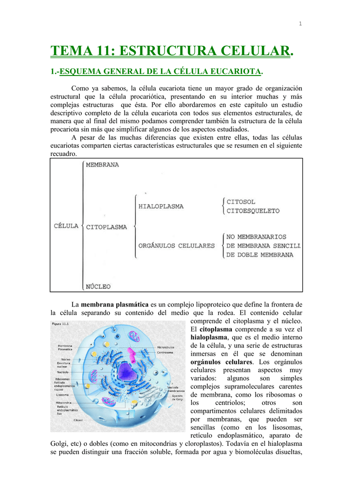 Tema 11 Morfología Celular