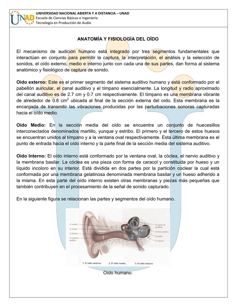 ANATOMÍA Y FISIOLOGÍA DEL OÍDO El mecanismo de audición