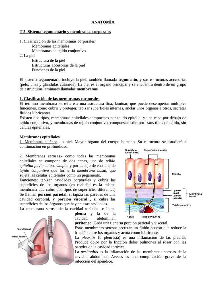 ANATOMÍA T 5. Sistema tegumentario y membranas corporales 1