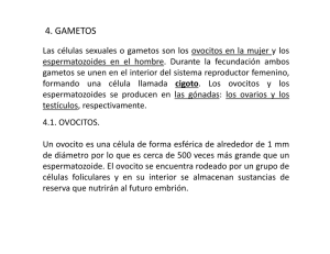 4. GAMETOS