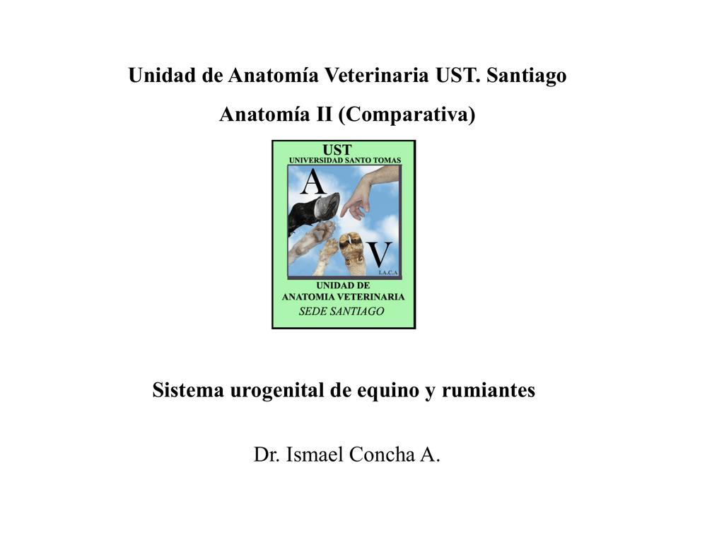 Sistema urogenital de equino y rumiantes Unidad de Anatomía