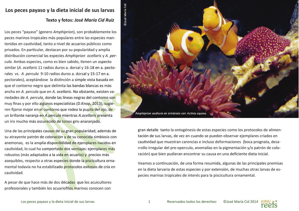 Los peces payaso y la dieta inicial de sus larvas