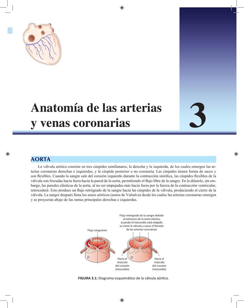 Anatomía de las arterias y venas coronarias