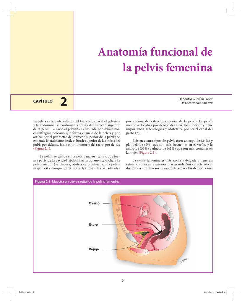 Anatomía funcional de la pelvis femenina