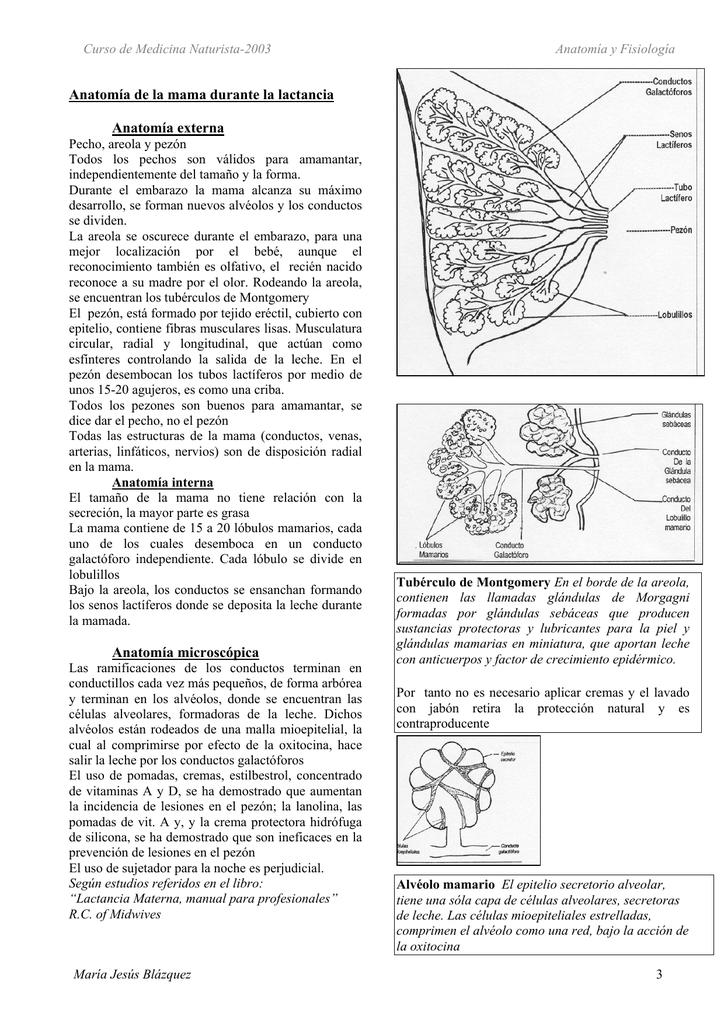 Anatomía y fisiología de la lactancia materna.