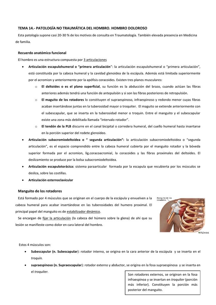 Bonito Deslizándose Articulaciones Cresta - Anatomía de Las ...