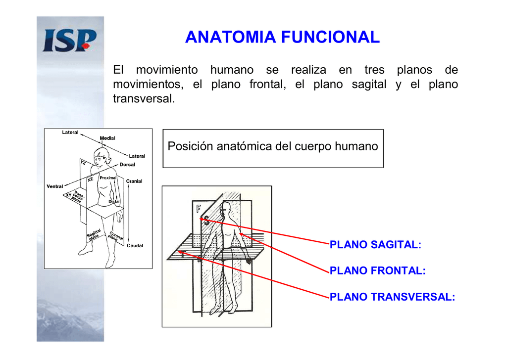 anatomia-biomecanica-antropometria_2