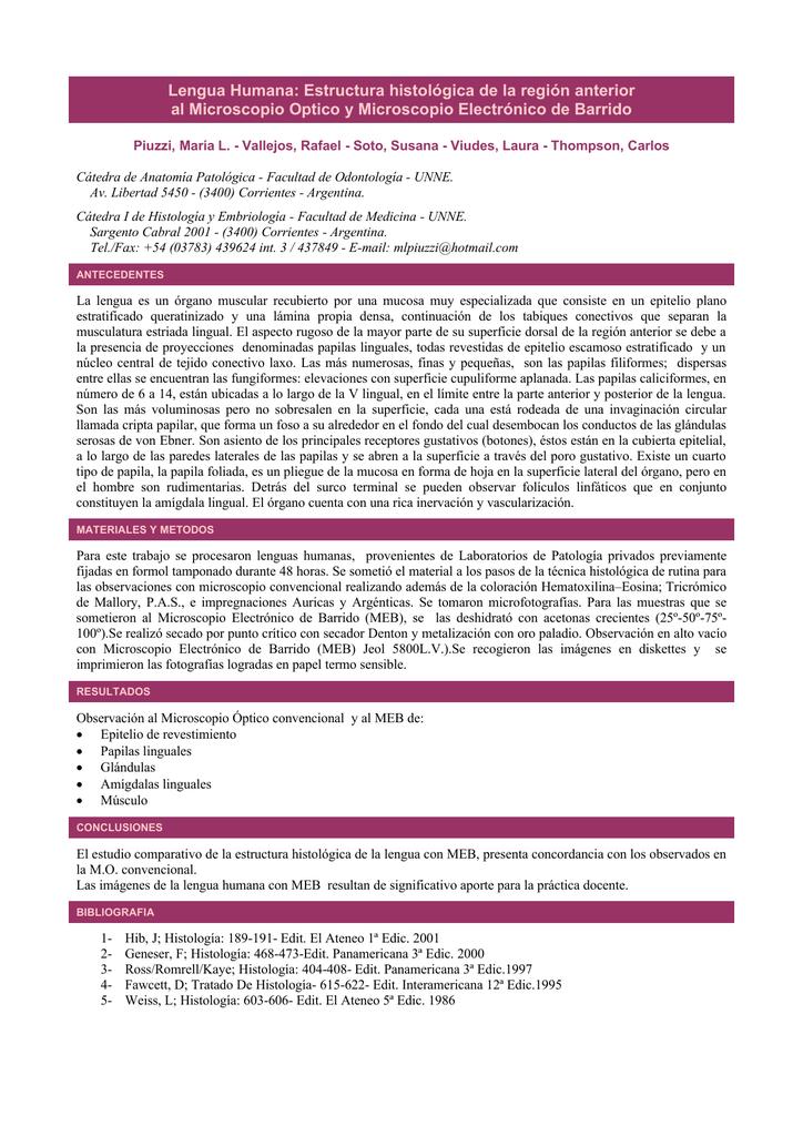 Lengua Humana Estructura Histológica De La Región Anterior Al