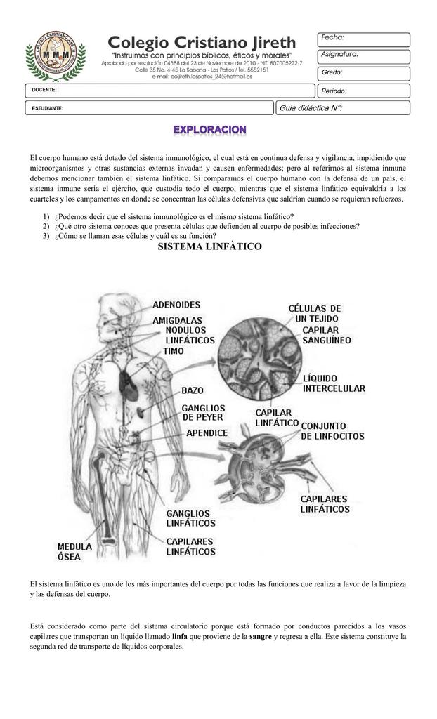 sistema linfàtico