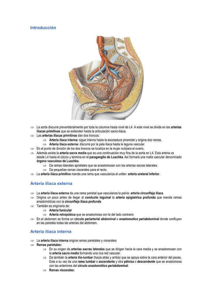 Angiología de la pelvis.