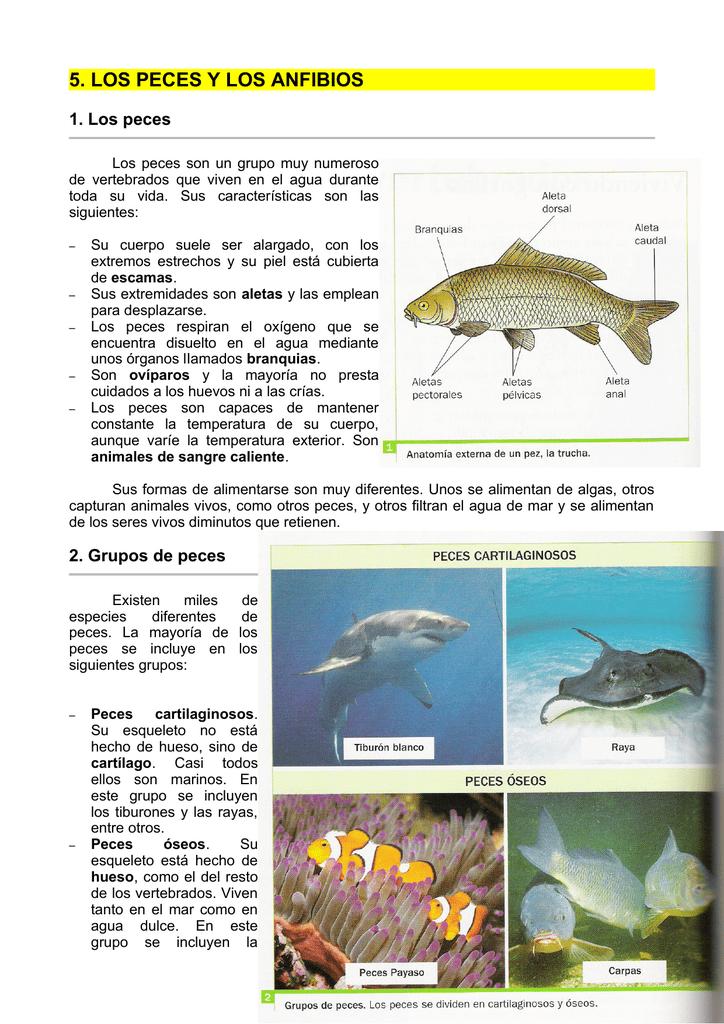 5. los peces y los anfibios