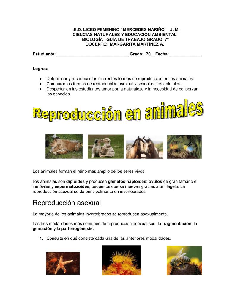 Invertebrados con reproduccion asexual gemacion