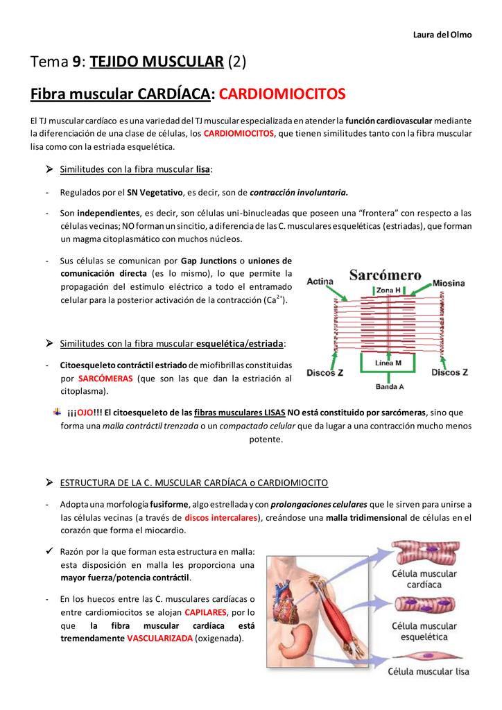 Tema 9: TEJIDO MUSCULAR (2) Fibra muscular CARDÍACA