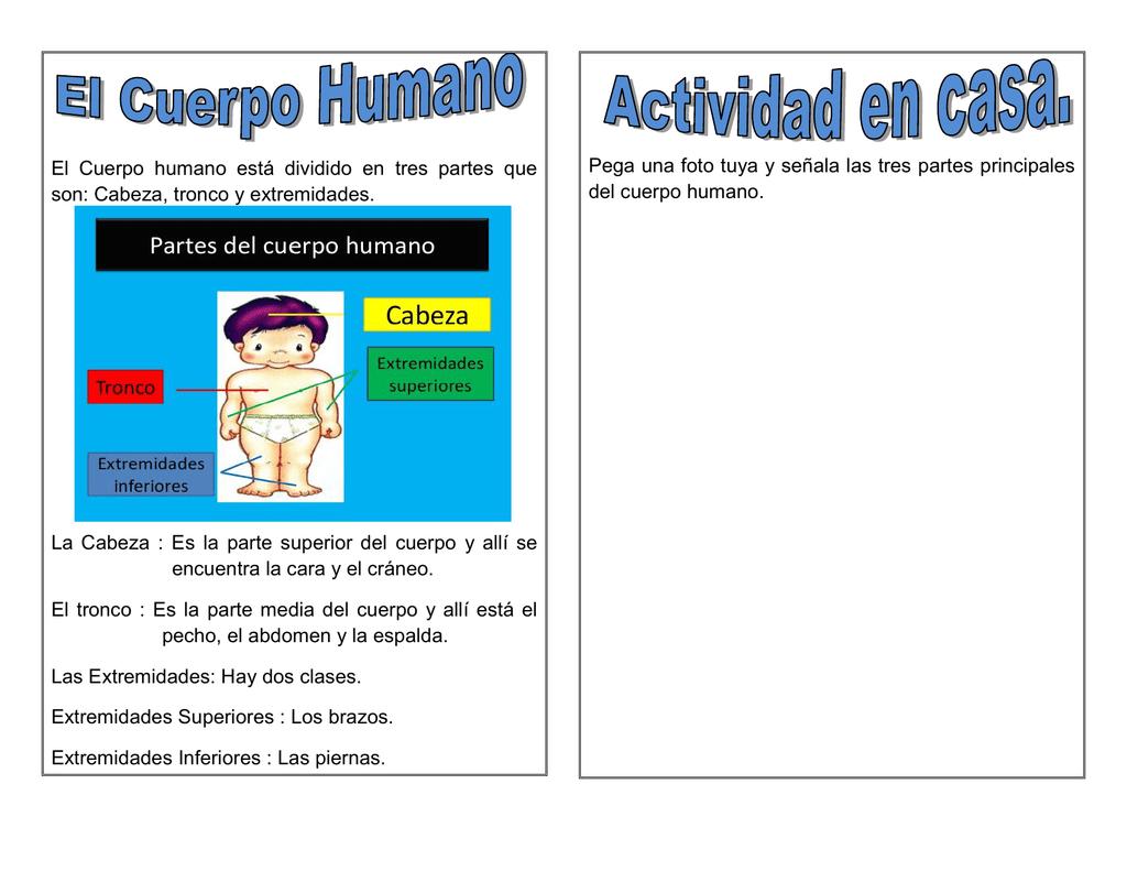 El Cuerpo Humano Está Dividido En Tres Partes Que Son Cabeza