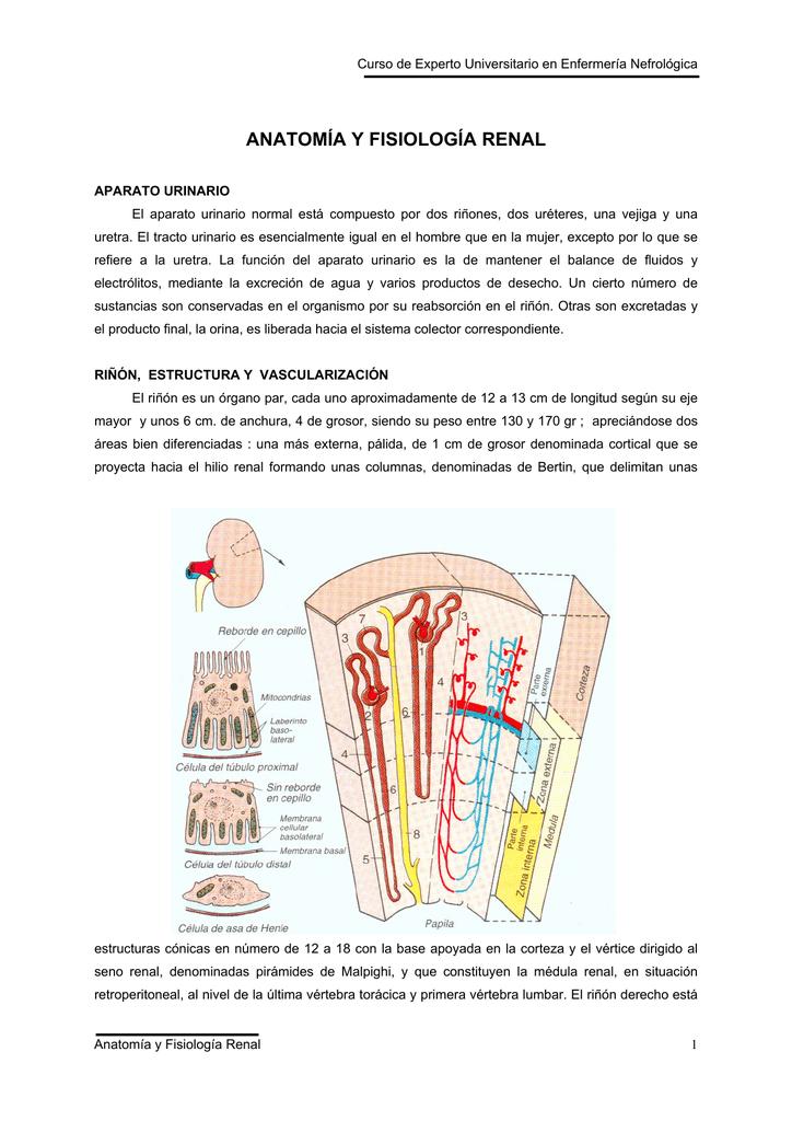 Renal - bionotas