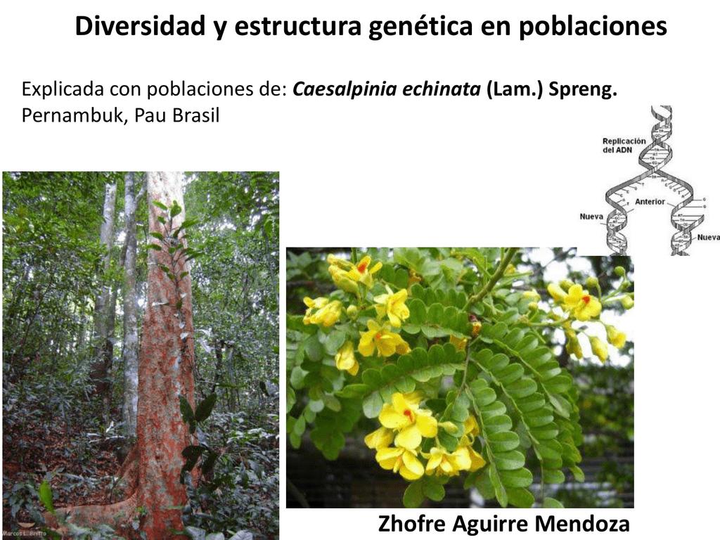 Diversidad Y Estructura Genetica En Poblaciones
