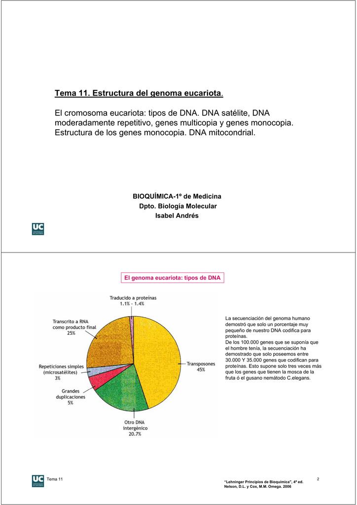 Tema 11 Estructura Del Genoma Eucariota El Cromosoma Eucariota