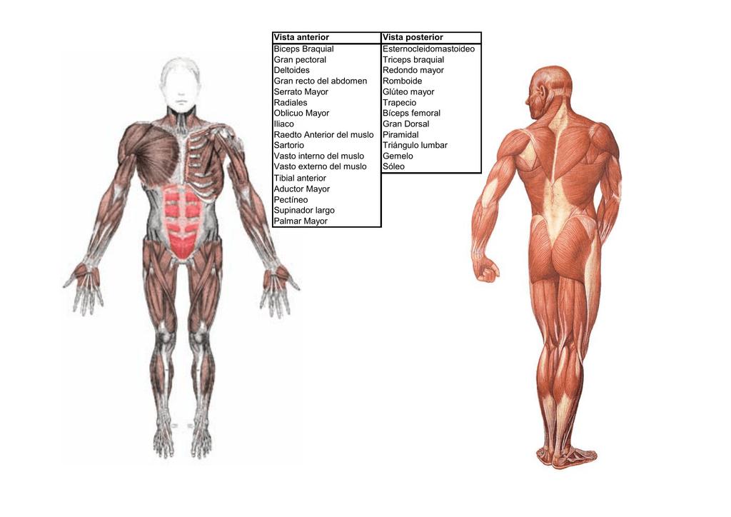 Vistoso Anatomía Pata De Rana Foto - Imágenes de Anatomía Humana ...
