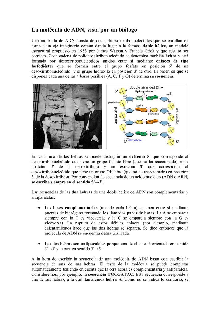 La Molécula De Adn Vista Por Un Biólogo