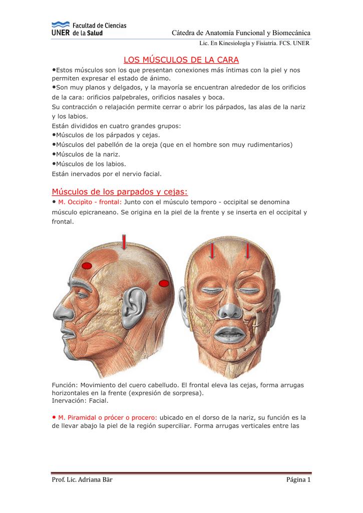 LOS MÚSCULOS DE LA CARA Músculos de los parpados y cejas: