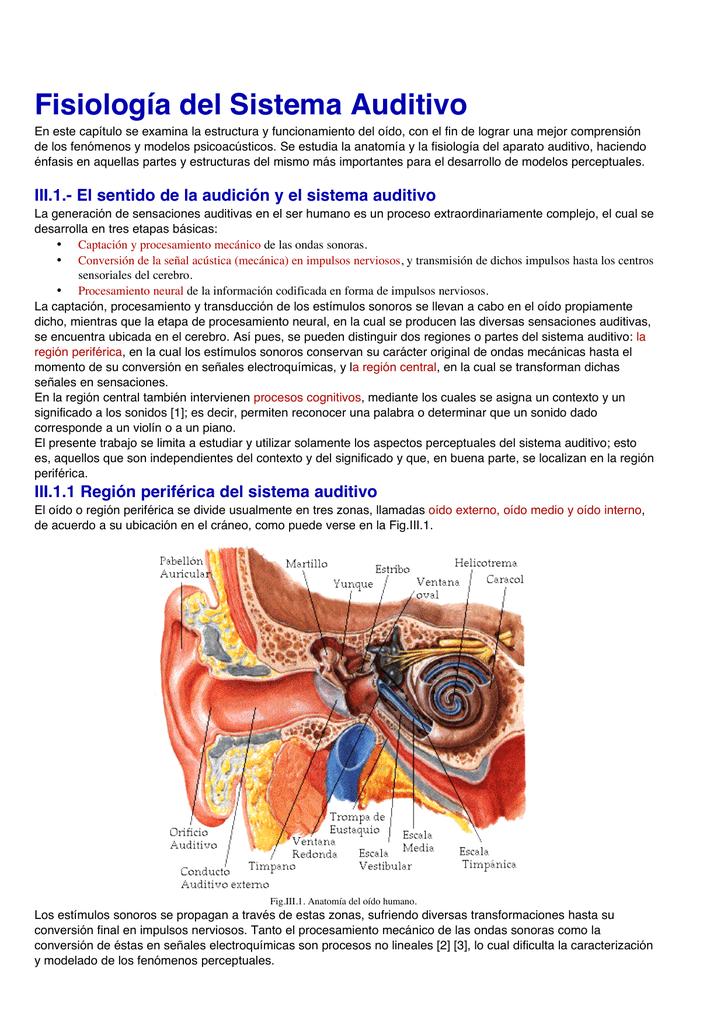 Excepcional El Habla Y La Audición Anatomía Y Fisiología La Ciencia ...
